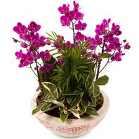 미니서양란+공기정화식물